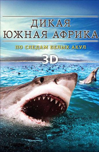 ДикаяЮжная Африка: По следам белых акул