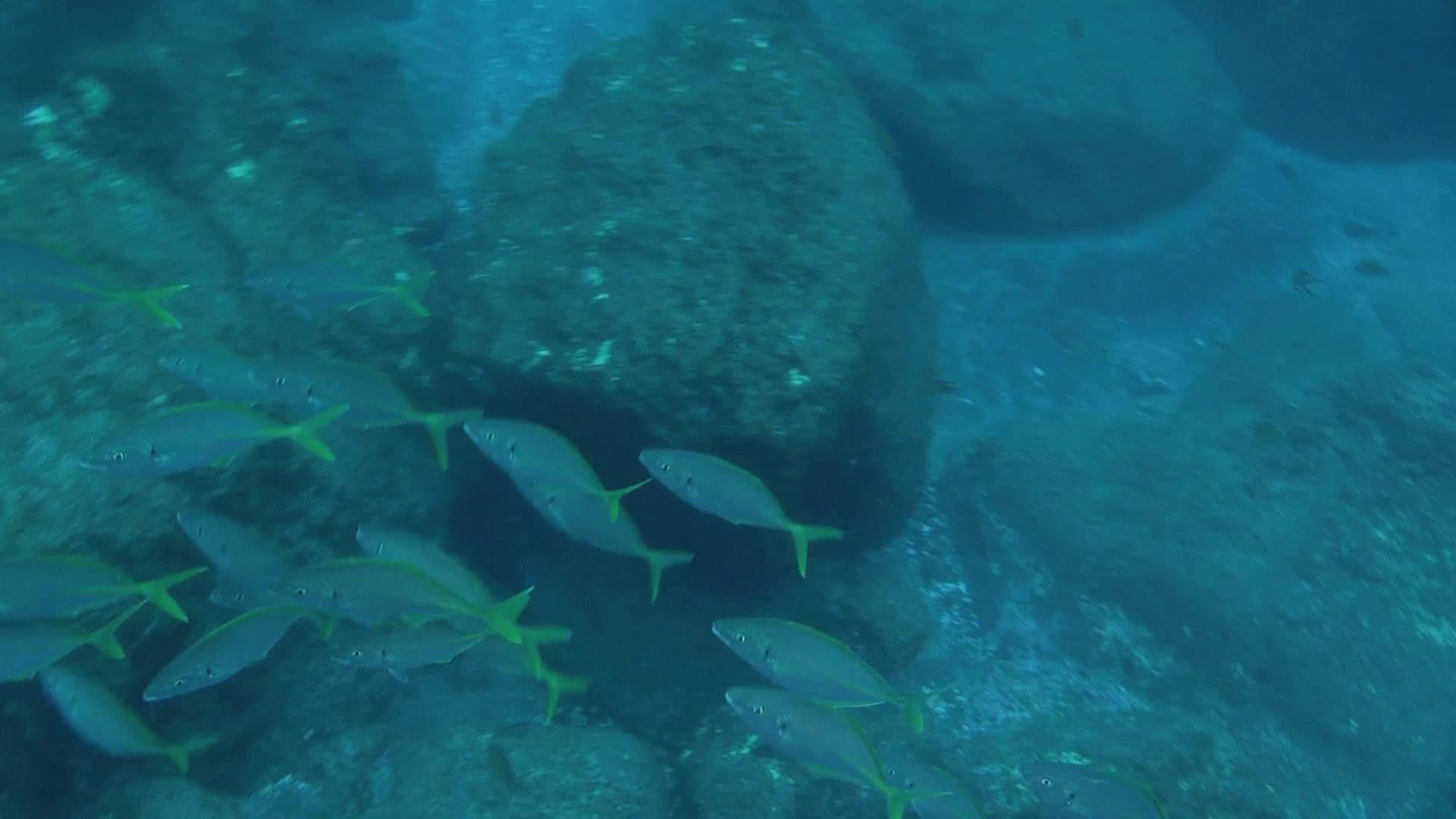 Азорские острова 3D. Часть 1: Акулы, киты, манты