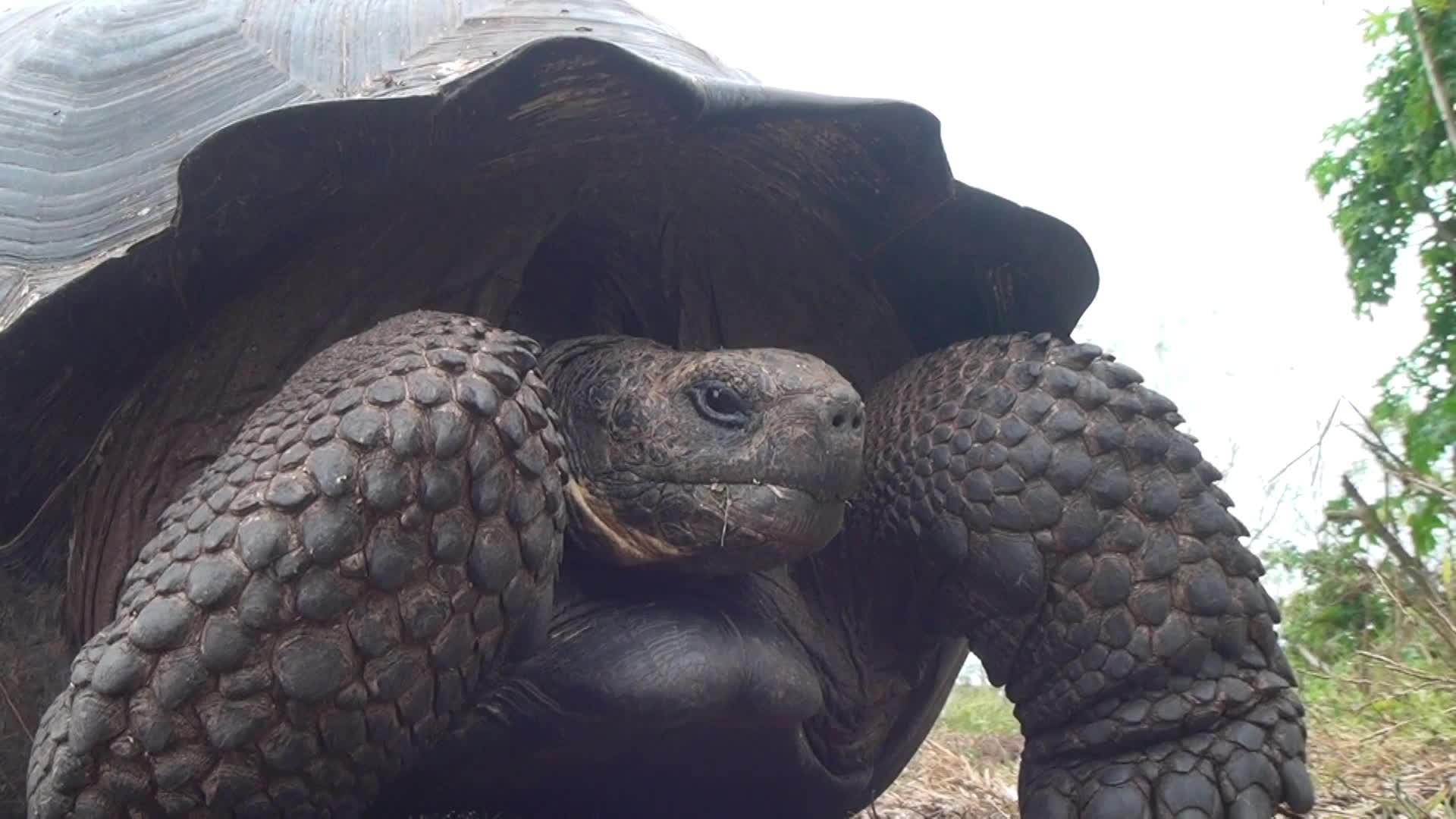 Уникальные Галапагосские острова 3D: Южная Америка