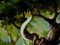 Симба: Король-лев (1995) / 42 серия