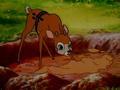 Симба: Король-лев (1995) / 24 серия