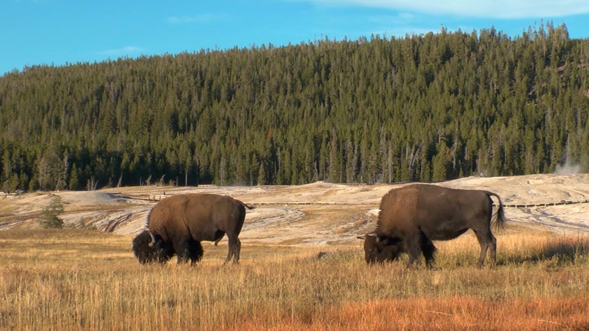 Всемирное природное наследие США: Национальный парк Йелоустоун 3D