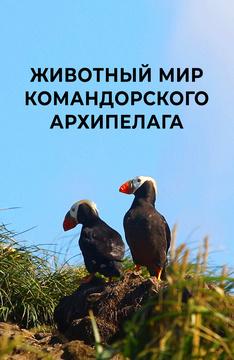 Животный мир Командорского архипелага