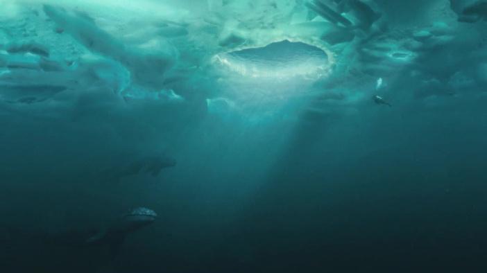 Язык синего кита весит больше, чем слон. - International News ... | 394x702