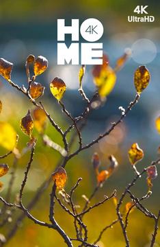 [4k] Осень