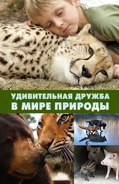 Картинки природы и животных все подряд